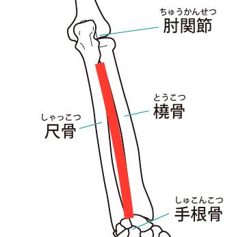 前腕骨間膜