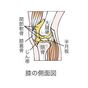 膝の軟骨や半月板